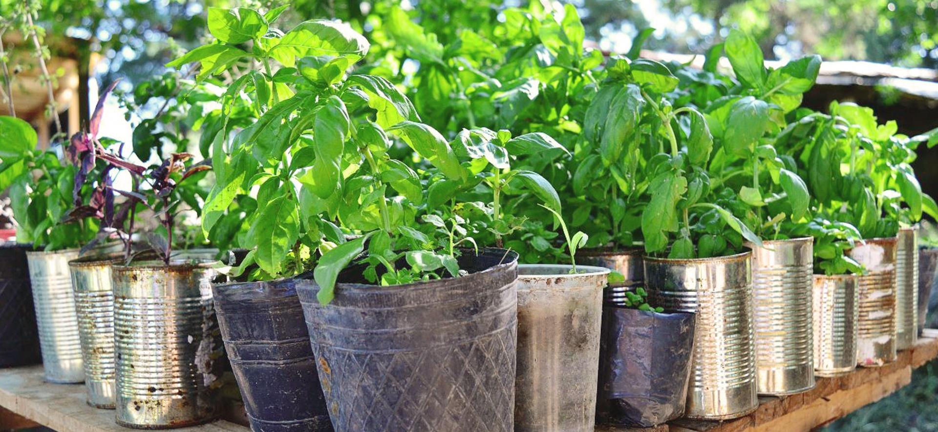 Curso de Capacitación laboral en Horticultura, fruticultura y forestación