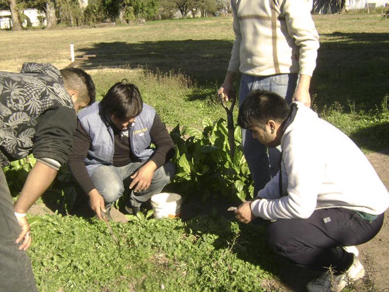 Horticultura, Fruticultura y Forestación