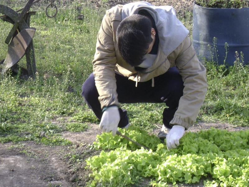 Horticultura, floricultura y forestación